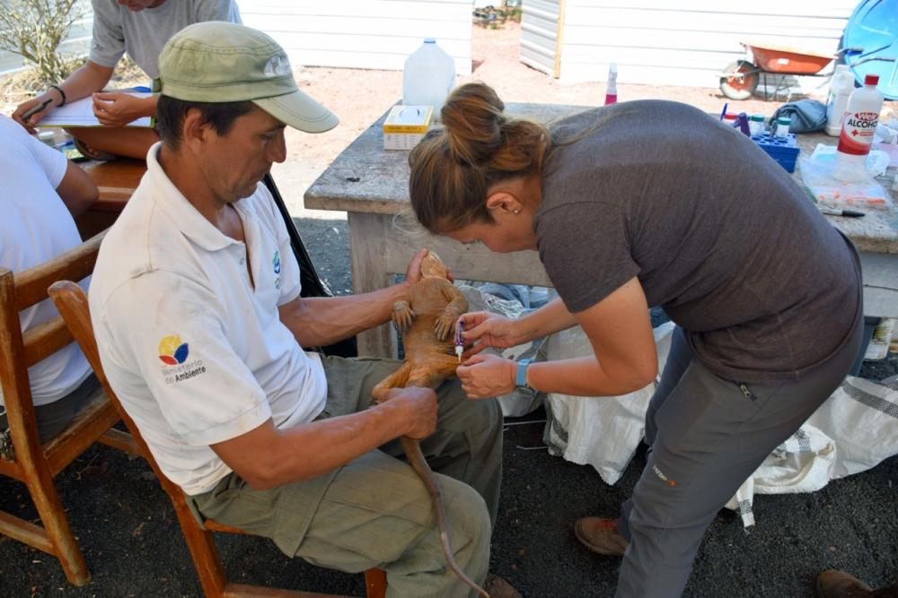-_ecuador-galapagos-conservation-iguanas_28372514.jpg